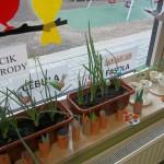 Ogródek wiosenny